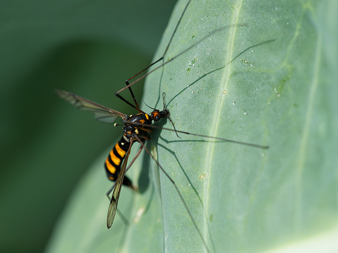 fliegen und schnaken im naturgarten