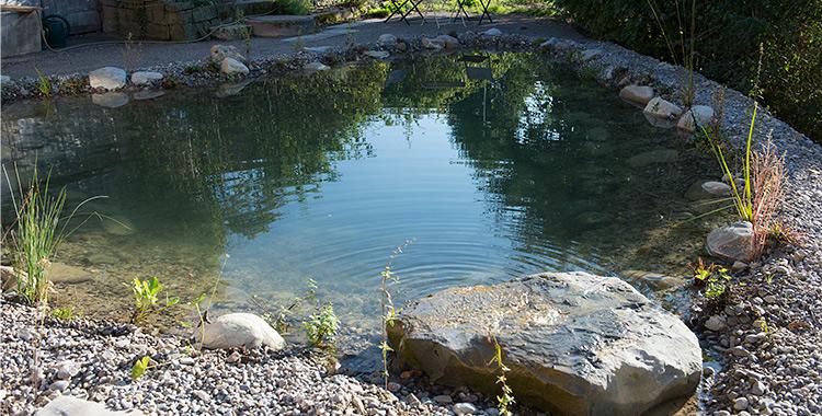 Wasser f r teiche bachl ufe brunnen und sumpfbeete for Gartenteich sauerstoff
