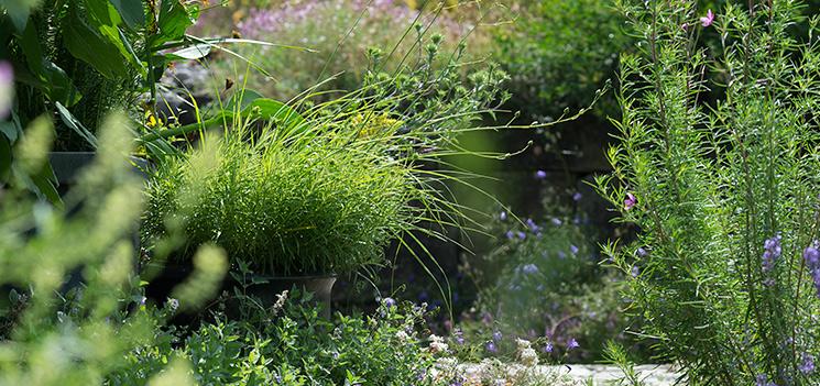 Naturgarten aktuell pflanzen und tiere for Fliegen in topfpflanzen