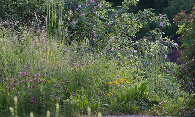 Ansaat Und Pflege Von Blumenrasen Und Blumenwiesen