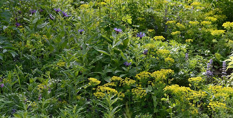 Wildpflanzenbeet Selber Planen Und Anlegen Ein Hubsches Blumenbeet Planen