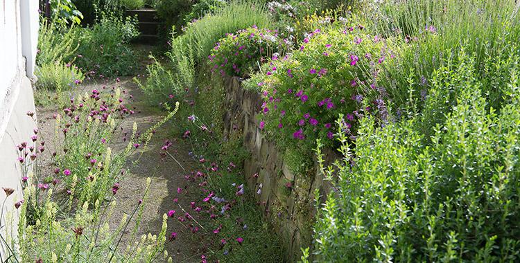 kies weg im garten, privater naturgarten selbst geplant und gebaut, Design ideen