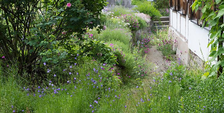 privater naturgarten selbst geplant und gebaut. Black Bedroom Furniture Sets. Home Design Ideas