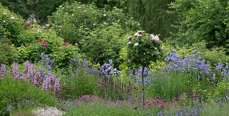 wildpflanzenbeet selber planen und anlegen, Gartenarbeit ideen