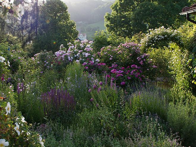 Beliebt Bevorzugt Begleitpflanzung zu Alten Rosen #FY_92